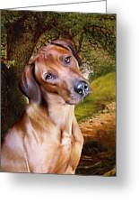Ridgeback Woodland Greeting Card by Julie L Hoddinott