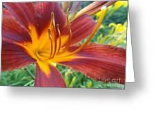 Ripe Blood Orange Greeting Card by Trish Hale