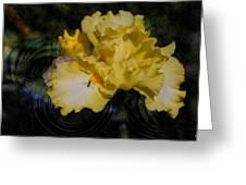 Rippling Iris Greeting Card by Kelly Rader