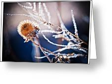 Road Side Plant Greeting Card by Lisa  Spencer