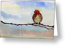 Robin 1 Greeting Card by Anil Nene