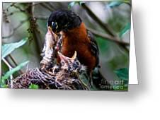 Robin Feeding Young 1 Greeting Card by Terry Elniski