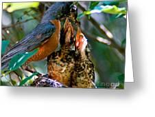 Robin Feeding Young 2 Greeting Card by Terry Elniski