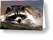 Rocky Raccoon Greeting Card by Robert Smith