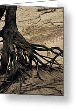 Roots Greeting Card by Odd Jeppesen