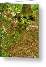 Roots Of A Tree At Ciucaru Mare Forest Greeting Card by Gabriela Insuratelu