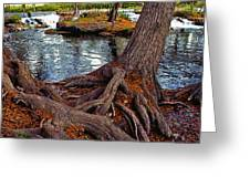 Roots On The River Greeting Card by Stephen Anderson