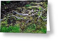 Roots Greeting Card by Randall Weidner