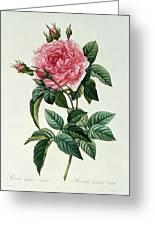 Rosa Gallica Regalis Greeting Card by Pierre Joseph Redoute