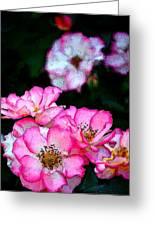 Rose 121 Greeting Card by Pamela Cooper
