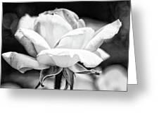 Rose 2 Greeting Card by Rosanne Nitti