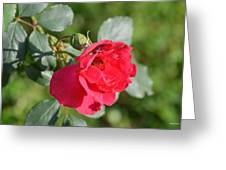 Rose And Bud Greeting Card by Maria Urso