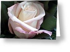 Rose Greeting Card by Chris Anderson