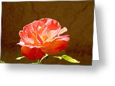 Rose Greeting Card by FeVa  Fotos