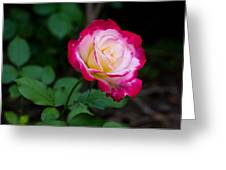 Rose IIi Greeting Card by Tim  Fitzwater