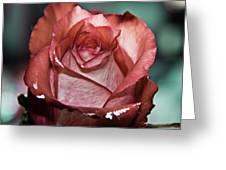 Rose Love Greeting Card by Svetlana Batalina