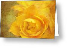 Roses for Remembrance Greeting Card by Judi Bagwell