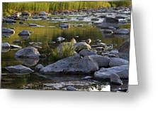 Rouge Reflections Three Greeting Card by Alan Rutherford