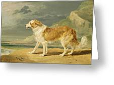 Rough-coated Collie Greeting Card by James Ward