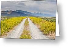 Ruby Mountains Wildflower Road Greeting Card by Sheri Van Wert