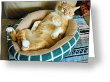 Rudy's Nap Time Greeting Card by Cheryl Poland