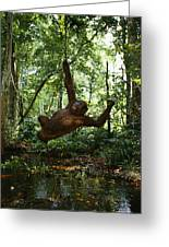 Running, Chasing And Swinging On Vines Greeting Card by Michael Nichols