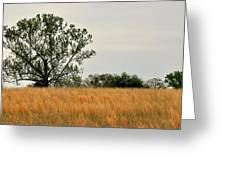 Rural Landscape Greeting Card by Marty Koch