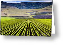 Rural Landscape With Planted Crops Greeting Card by David Buffington