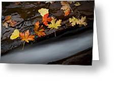 Rushing Autumn Greeting Card by Jim Speth
