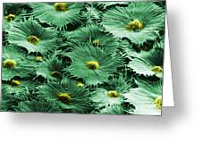 Russian Silverberry Leaf  Greeting Card by Asa Thoresen and Photo Researchers