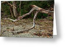 Sagamore Creek Shoreline Greeting Card by Ron St Jean