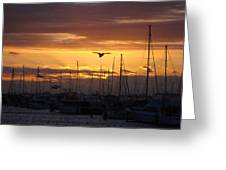 Sails At Sunset Greeting Card by Kelly Jones