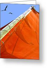 Sails Five Greeting Card by Kathleen Horner