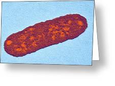 Salmonella Bacterium, Tem Greeting Card by Dr Klaus Boller