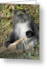 Samango Monkey Greeting Card by Tony Camacho