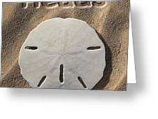 Sand Dollar Heads Greeting Card by Mike McGlothlen