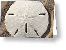Sand Dollar Greeting Card by Mike McGlothlen