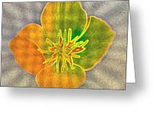 Sand Flower Greeting Card by Mitch Shindelbower
