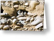 Sand Martins Greeting Card by Duncan Shaw