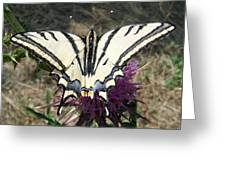 Scarce Swallowtail Greeting Card by Eric Kempson