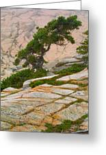 Schoodic Cliffs Greeting Card by Brent L Ander