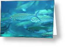 School Of Black Striped Salema Fishes Greeting Card by Sami Sarkis