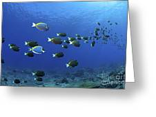 School Of Surgeonfish, Christmas Greeting Card by Mathieu Meur