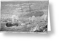 School Of Whales, 1876 Greeting Card by Granger