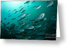 School Of Yellow Masked Surgeonfish Greeting Card by Mathieu Meur