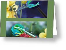 Science Class Diptych 2 - Praying Mantis Greeting Card by Steve Ohlsen