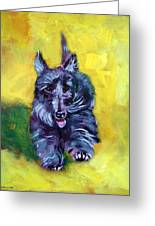 Scottie Trot  - Scottish Terrier Greeting Card by Lyn Cook