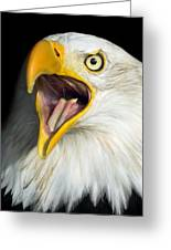 Screaming Eagle Portrait Greeting Card by Artur Bogacki