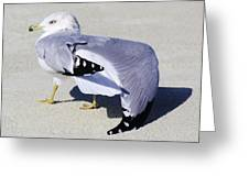 Sea Gull Stretching It Out Greeting Card by Paulette Thomas
