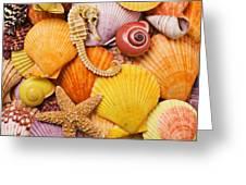 Sea horse starfish and seashells  Greeting Card by Garry Gay